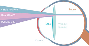 Irreversible damages of UV radiations on eyes